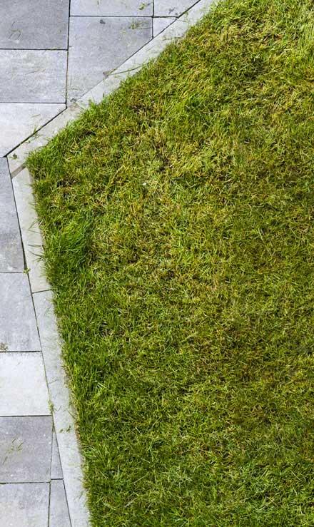 Harris Best Lawn Care LLC Lawn Dethatching