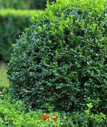 Harris Best Lawn Care LLC Shrubs & Hedges