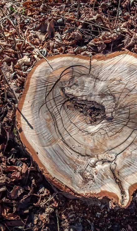 Harris Best Lawn Care LLC Tree Removal