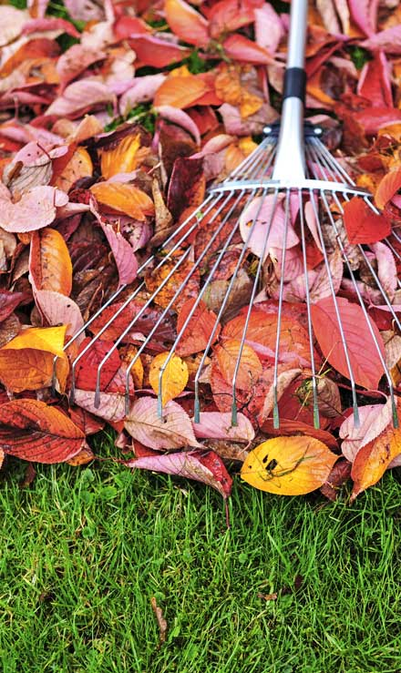 Harris Best Lawn Care LLC Fall Clean Up