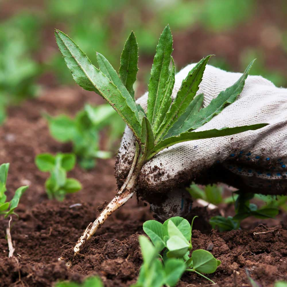 Weed Control Service